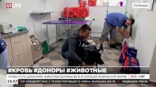 В Польше кошки и собаки помогают спасать жизнь сородичам