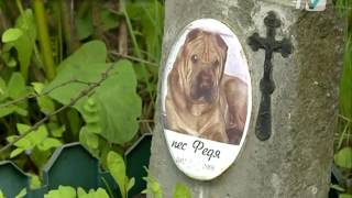 Кладбище домашних животных на Костюшко, 5 ликвидируют за счет средств бюджета