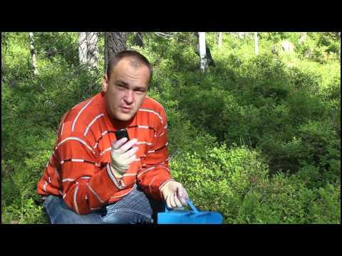 Вопрос: Где собирать голубику в Челябинской области Какие места, когда?