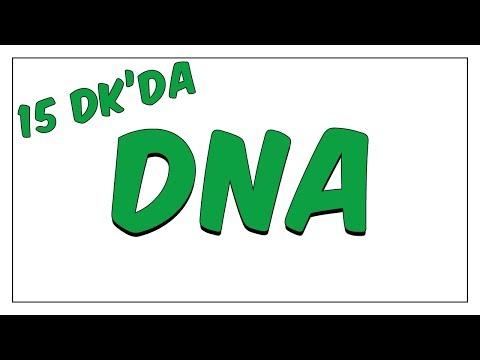 15dk'da DNA