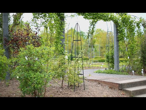 garten obelisk rankhilfe youtube. Black Bedroom Furniture Sets. Home Design Ideas