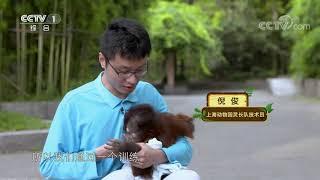 [正大综艺·动物来啦]以下哪个行为是需要后天练习才能熟练运用| CCTV