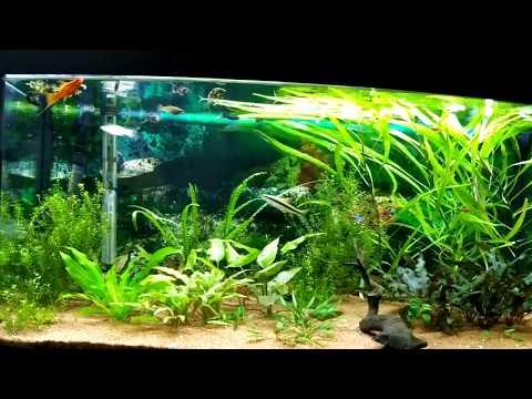 Если аквариум недалеко от окна