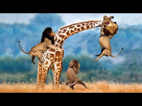 LIVE: AMAZING Moments Of Animal Fight Battle  Discovery Wild Animal Planet 2018