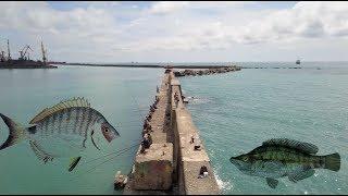 Рыбалка на Черном море. Черноморский карась