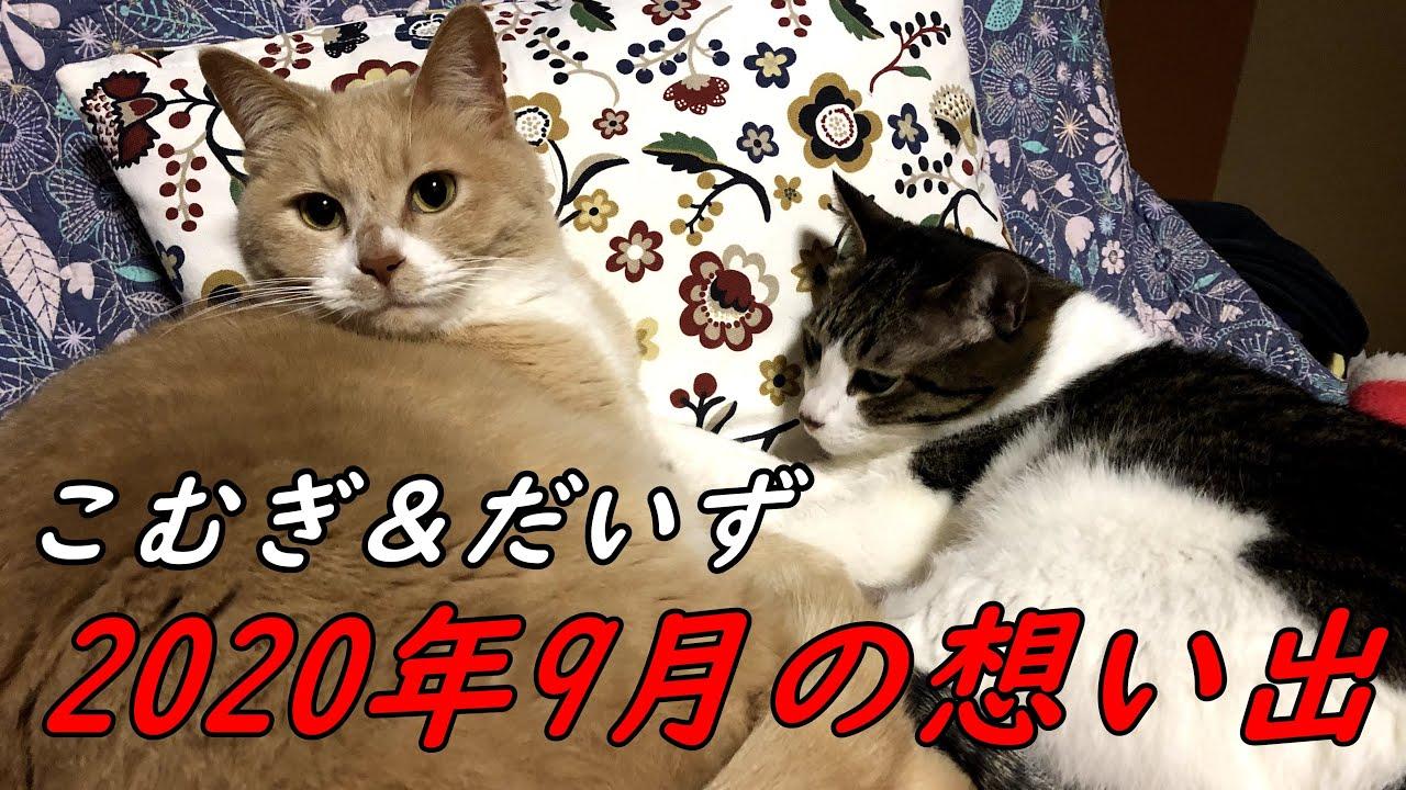 【猫日記こむぎ&だいず】2020年9月の想い出 Part1