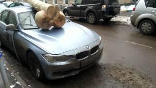 Большой Член на BMW
