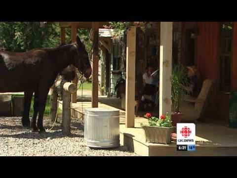 Homemade Saloon | CBC
