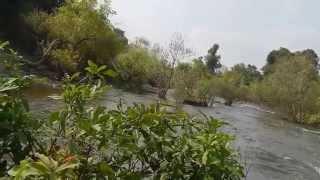 Repeat youtube video หนุ่มเขมรหาปลาแปลก แปลก ใช้ปะทัดโยนลงน้ำ amazing khmer find fish stile