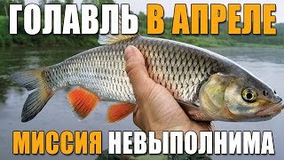 видео Секреты успешной ловли голавля