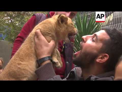 Palestinian zoo owner puts three lion cubs up for sale