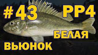 Російська рибалка 4. Річка Берізка. Трофей річка Біла. Стрім 43