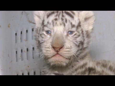 В чилийском зоопарке