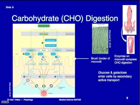 digestion worksheet