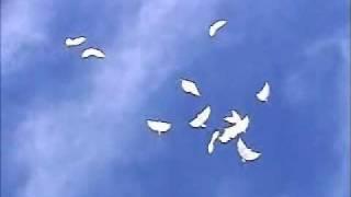 Skybirds / Skybird Hochzeit LichtWerk-Fulda.de