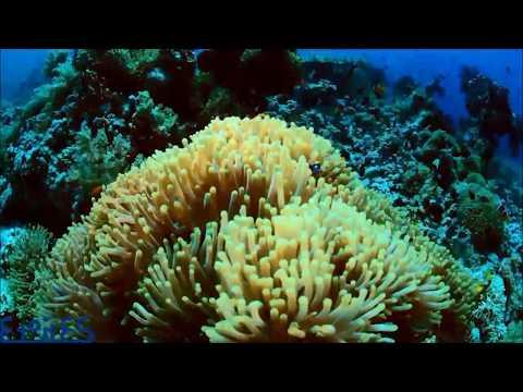 MY ETOILES - Un po' di reef...