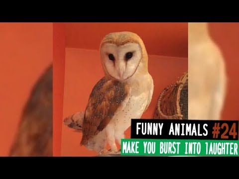 Funny animals will make you burst into laughter Funny animal compilation