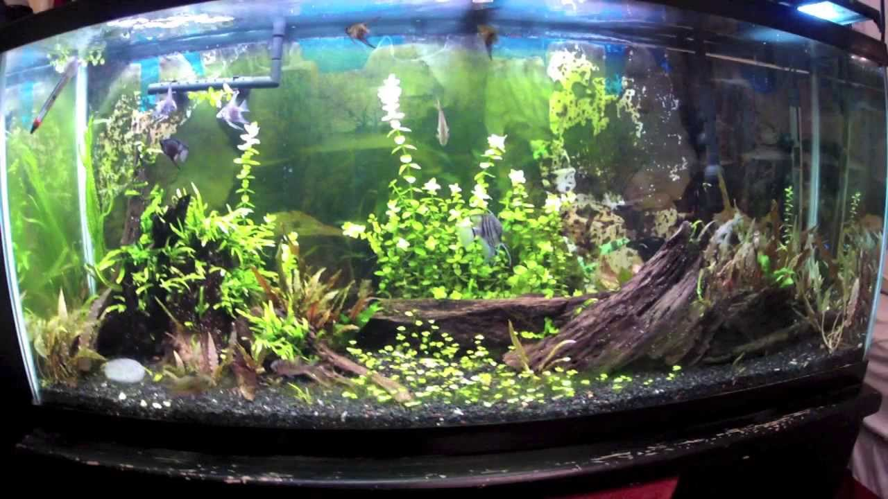 Aquarium lighting for plants - T8 Lighting And Low Light Leds For Planted Tanks