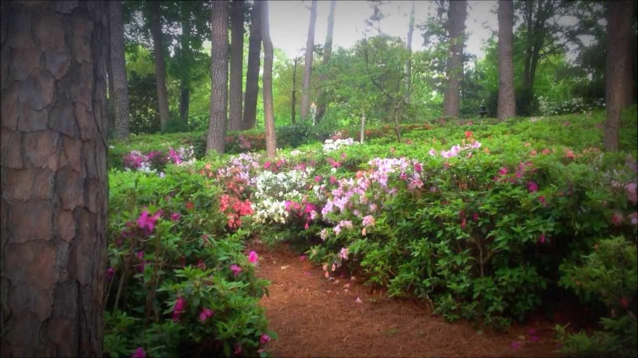 Wral Tv Azalea Gardens Youtube