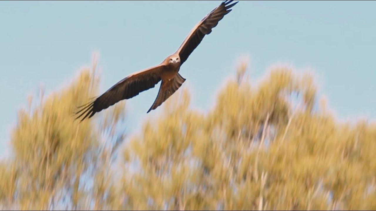 wild skies free flight