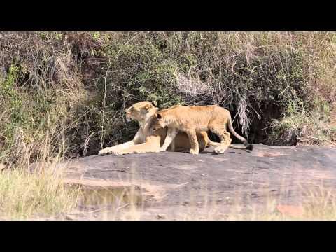 OMT Kenya - Nairobi National Park