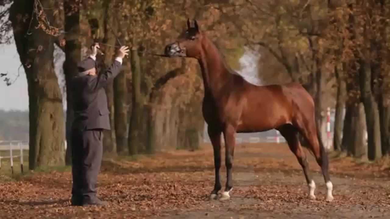 Arabian Horse Days Janów Podlaski 2014 Invitation Youtube