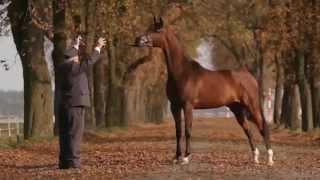 ARABIAN HORSE DAYS Janów Podlaski 2014: Invitation