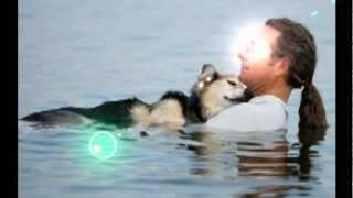 Хозяин,убаюкивающий свою собаку...The owner, soothing your dog ...