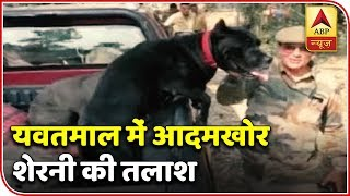 Maharashtra: Italian Dogs To Help Catch The Man-Eater Tigeress | ABP News