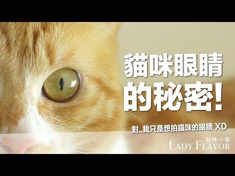 貓咪眼睛的秘密!除了萌暈人類以外!【好味貓知識】EP21