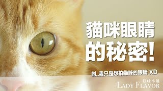 貓咪眼睛的秘密-除了萌暈人類以外-好味貓知識-ep19