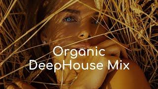 Dandara - Stereo Express - Liquid Bloom - Kermesse - Elfenberg - Disharmonia ✶ (Organic House Mix)