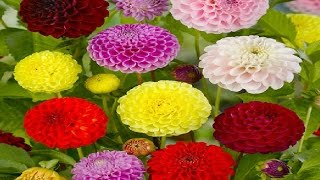 10 Most Beautiful Flowers In The World