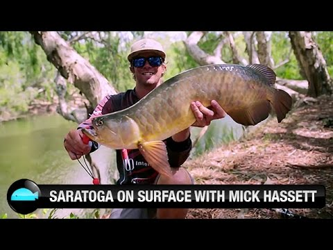 Catching Saratoga On Surface Lures | We Flick Fishing Videos