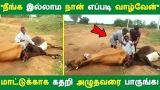 """""""நீங்க இல்லாம நான் எப்படி வாழ்வேன்"""" மாட்டுக்காக கதறி அழுதவரை பாருங்க!   Tamil News   Latest News"""