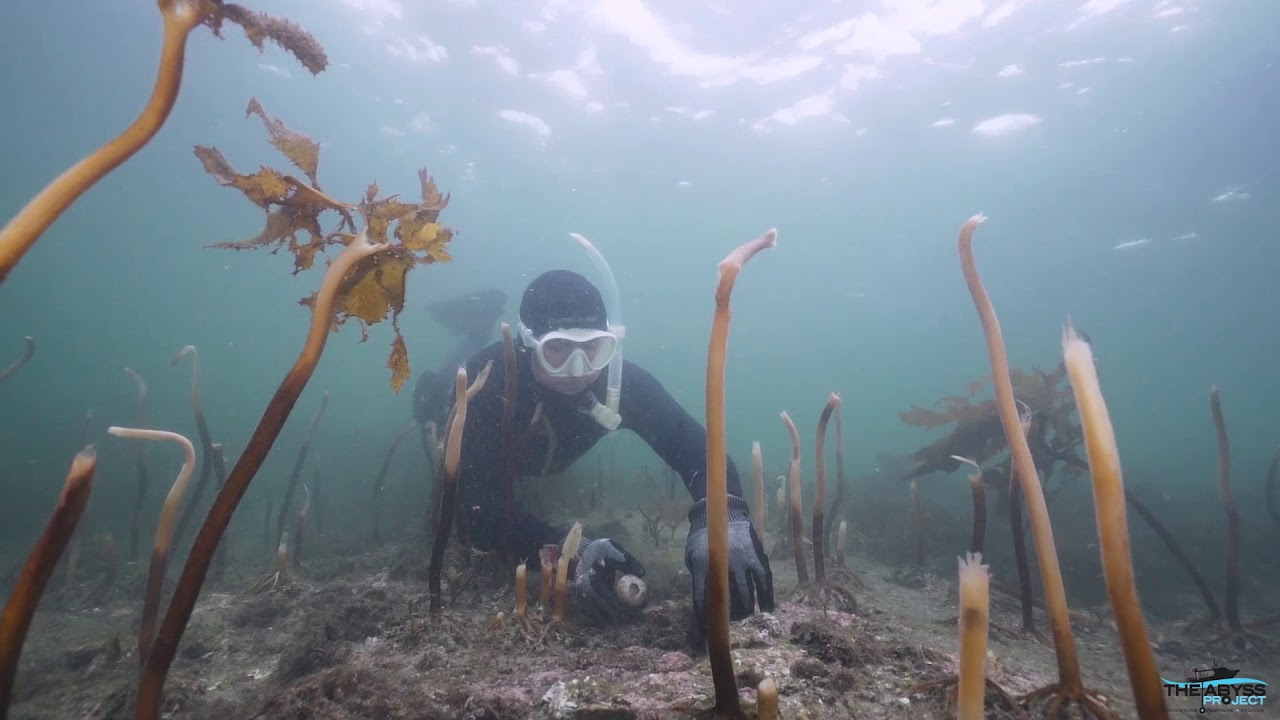 Sydney's coastal ecosystems suffer 'once-in-a-generation' mass ...