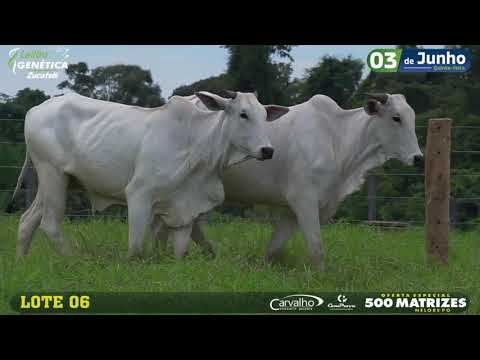 LOTE 006