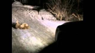 ШОООК!!! Убийцы Ангела задавили еще одну собаку!!!