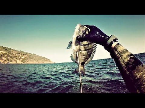 الصيد تحت مائي -١- وهران (درجة متوسطة)  chasse sous marine 1 à Oran (niveau moyen)