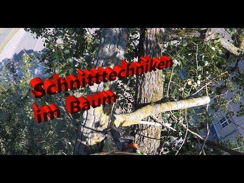 Basti Quatsch(t) #3 I Schnitttechniken Im Baum I Rigging