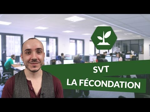 La fécondation - SVT - TS - digiSchool