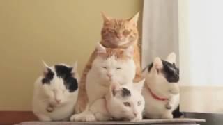 Hit! Śmieszne koty kompilacja najlepsze 2016 mega hit! koty 2016 najlepsze Śmieszne