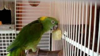 сюжет # 61 Птицы дикие и домашние
