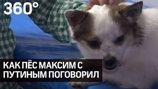 Фото День эколога. Как пёс Максимка поучаствовал в прямом эфире с Владимиром Путиным