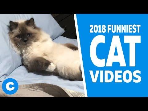 Funny Cat Videos 2018