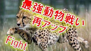http://elle-okina.net/ YouTubeチューニングノウハウとして雑誌に掲載...