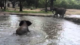 Kenya y Ashanti, tomando un baño en el Zoológico Guadalajara
