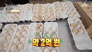 관상용 닭으로 연 매출 20억원 달성?! 반려동물 시장을 계(鷄)척하다! thumbnail