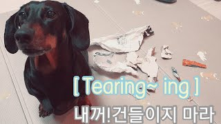 #shorts 내꺼 건들이지마라 Don't touch …