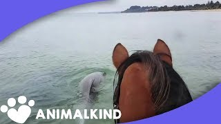 Horse's favorite pastime is playing with dolphins